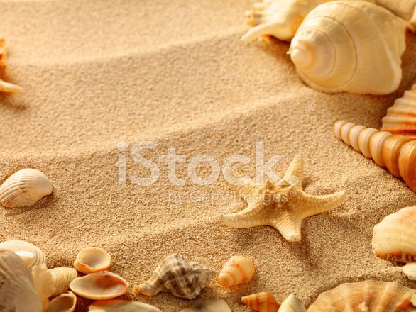 Conchiglie Di Mare Con Sabbia Come Sfondo Fotografie Stock