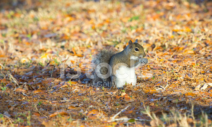 gray squirrel wallpaper - photo #25