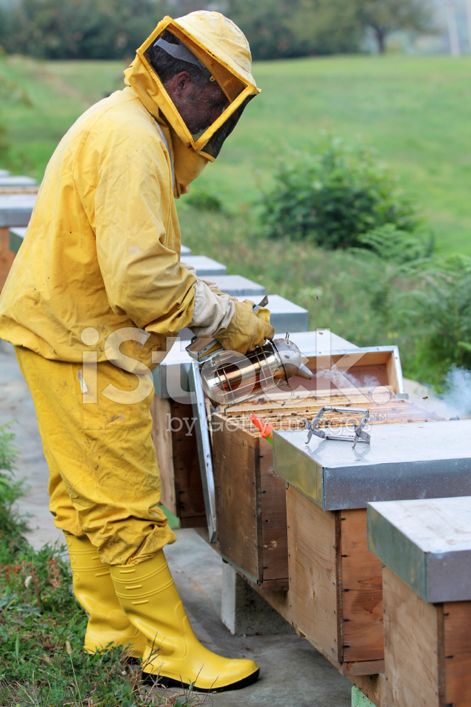 Beekeeper Smoking A Beehive Stock Photos - FreeImages.com