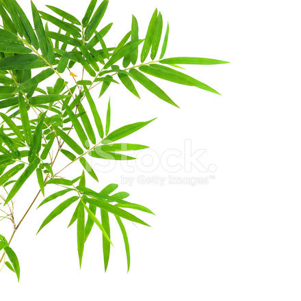 La Foglia Di Bamb.Foglie Di Bambu Fotografie Stock Freeimages Com