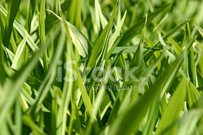 Zielone Chwasty Zdjęcia Ze Zbiorów Freeimagescom