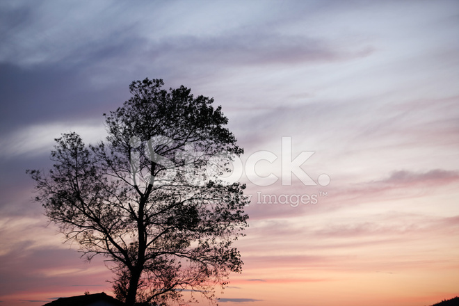 Setting Sun Spotlights Solitary >> Setting Sun Behind Solitary Tree Stock Photos Freeimages Com