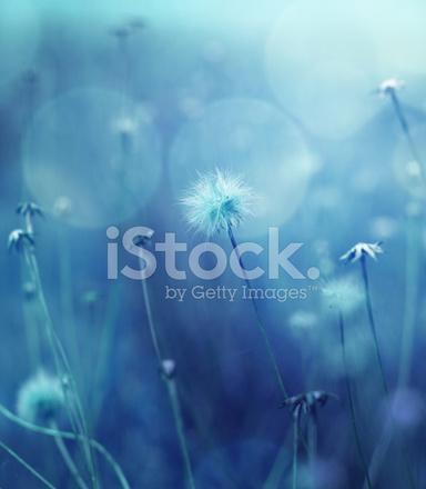 Kış Doğa Arka Planı Renkli Stok Fotoğrafları Freeimagescom