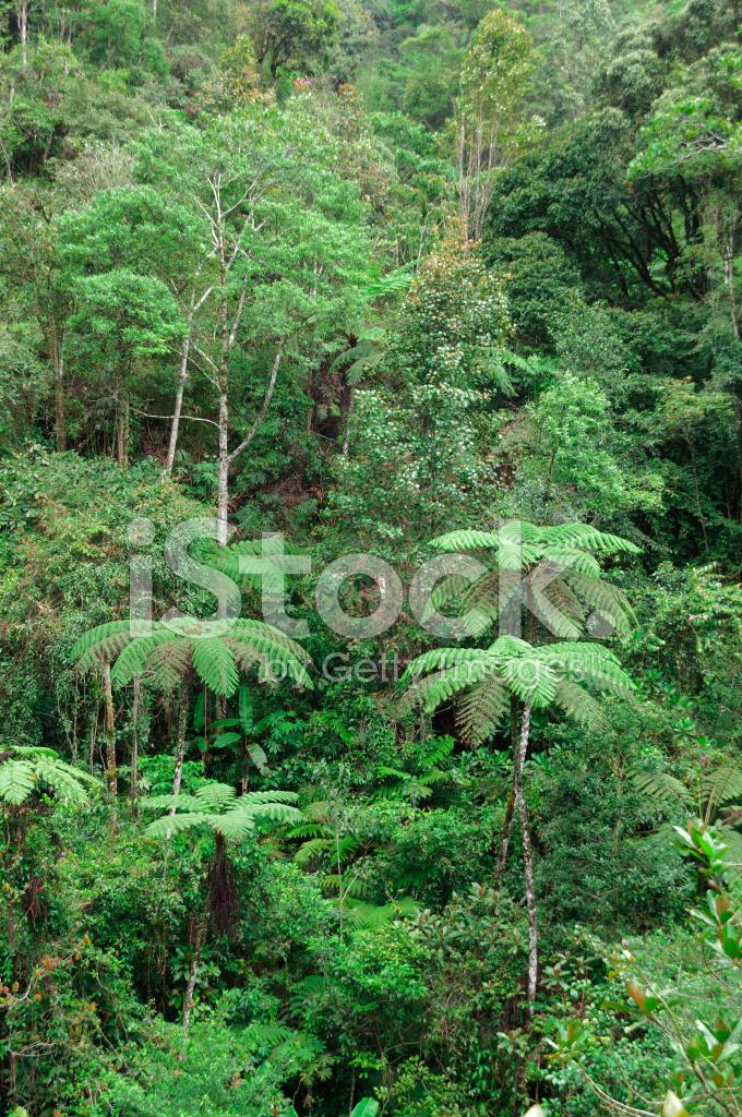 Selva Bosque Humedo Tropical Fotografias De Stock Freeimages Com