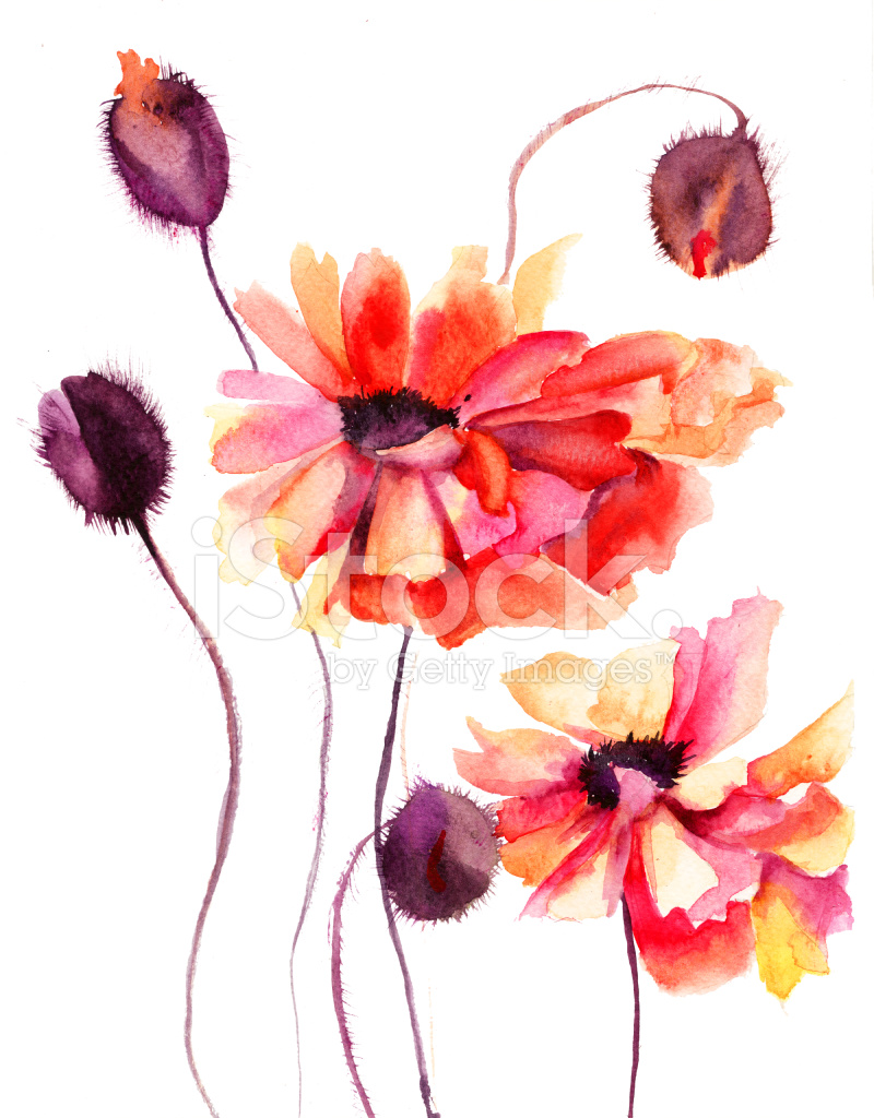 Beautiful Poppy Flowers Watercolor Painting Stock Vector