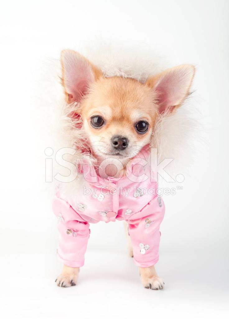 Chihuahua mantel rosa