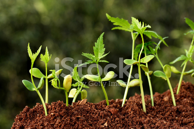 Plants growing from soil plant progress stock photos for In a garden 26 trees are planted