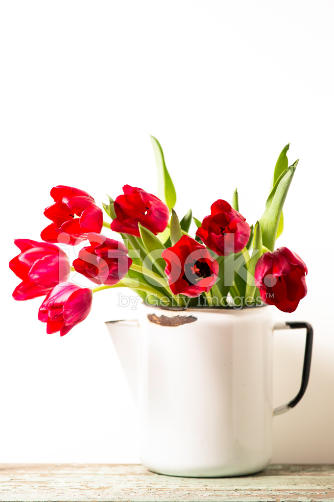 Red Tulips In White Pitcher Stock Photos Freeimages Com