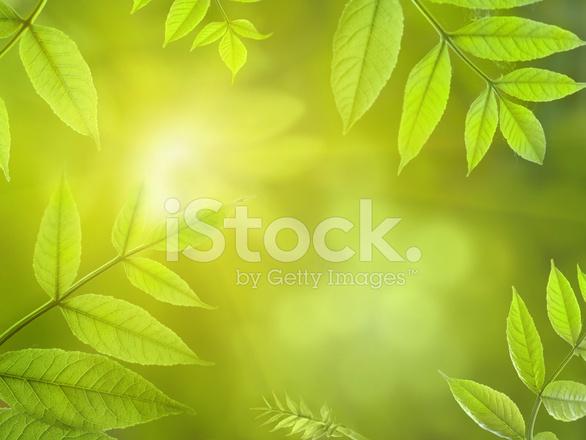 Hojas DE Color Verde Primavera Fotografías de stock - FreeImages.com