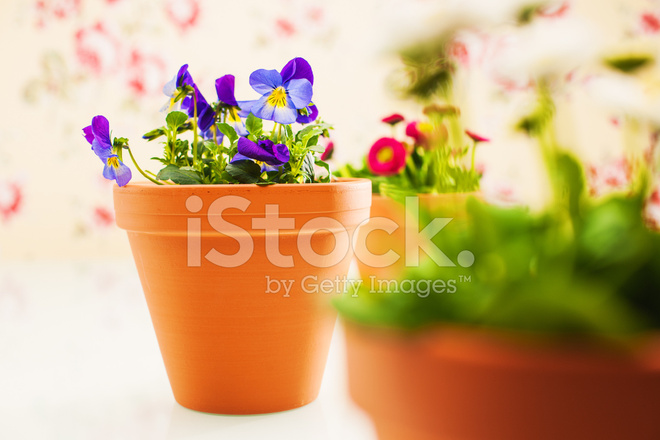 Potted plants and flowers