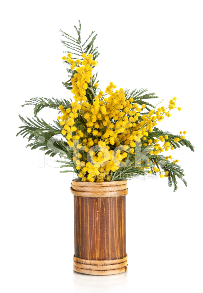 bouquet von gelben mimosen akazie blumen in der vase stockfotos. Black Bedroom Furniture Sets. Home Design Ideas
