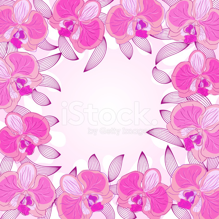 Orchid Frame Stock Vector - FreeImages.com