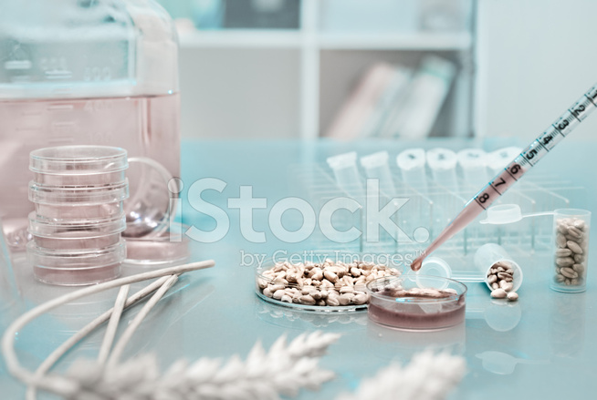 Testing Genetically Modified Wheat Stock Photos - FreeImages com