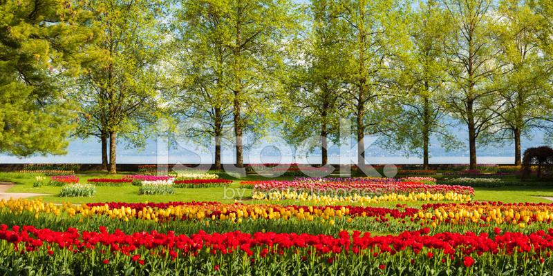 Beautiful Tulip Garden Near Lake Geneva stock photos