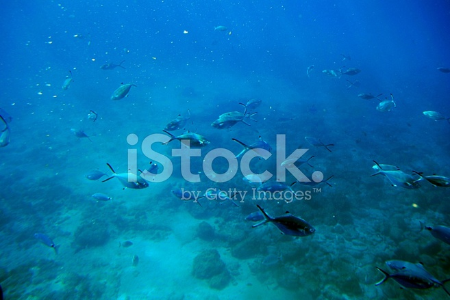 Free online dating fish in the sea