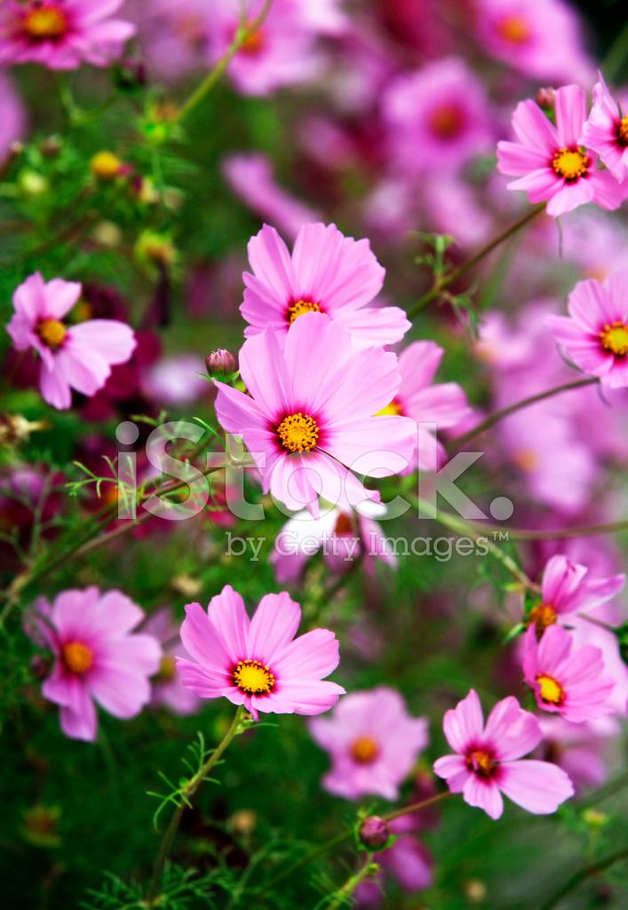 Güzel çiçekler Evren Stok Fotoğrafları Freeimagescom