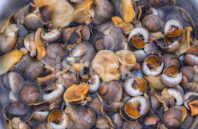 越南海蝸牛或海洋腹足綱軟體動物...