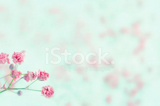 Pink babys breath flowers with copy space stock photos freeimages pink babys breath flowers with copy space mightylinksfo