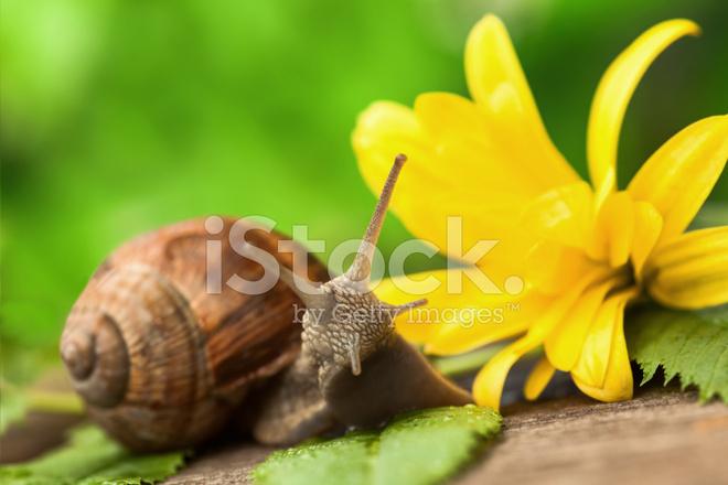 Beautiful Snail Stock Photos