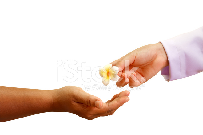 doctor giving a flower to patient s hand stock photos freeimages com
