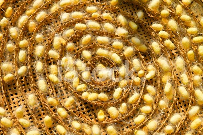 Silkworm cocoon food