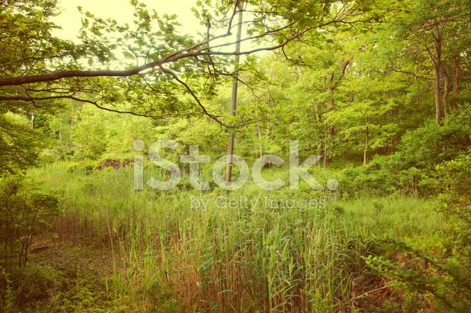 Doğa Arka Plan Stok Fotoğrafları Freeimagescom