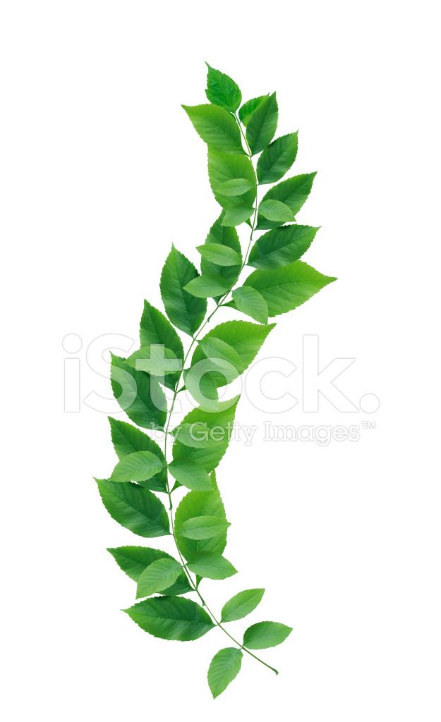 Green Leaf Border Line Green Leaves Border St...