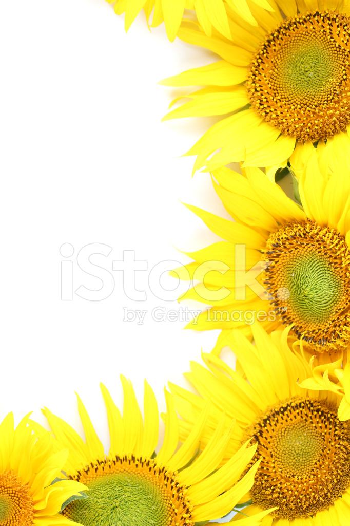 Sunflower Frame Stock Photos - FreeImages.com