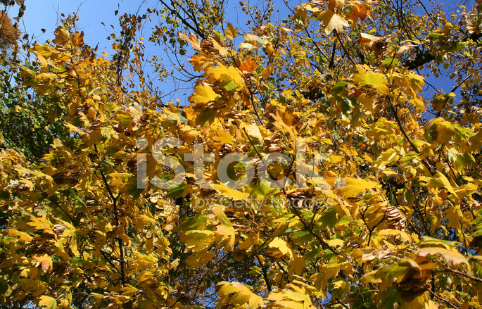 Autumn Leaves Blowing In The Wind Stock Photos Freeimages Com