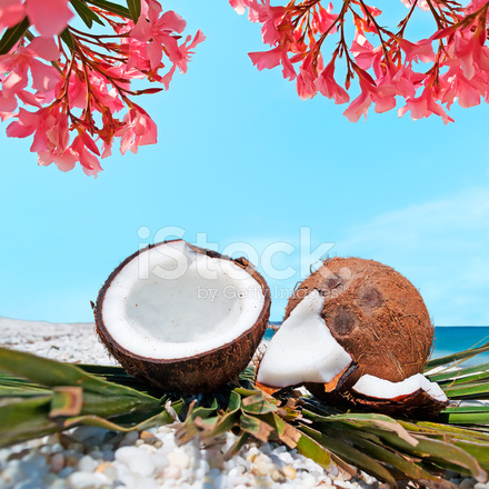 flowers and coconuts stock photos freeimagescom