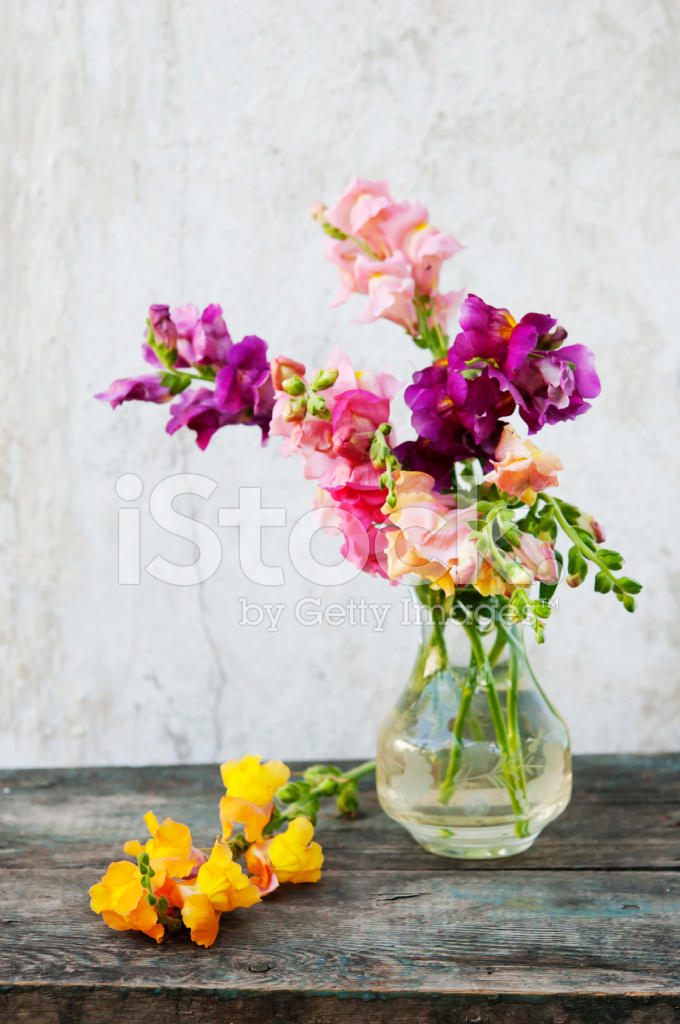 Snapdragons Flowers In Vase Stock Photos Freeimages