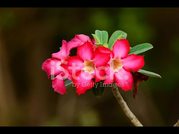 flor hermosa fotografías de stock freeimages com