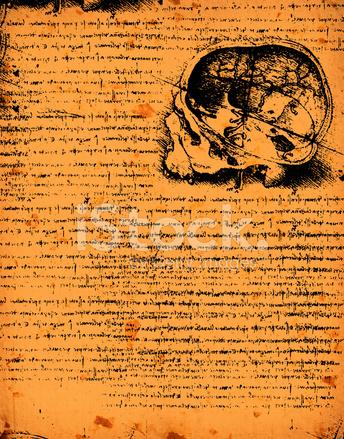 Anatomía Arte Stock Vector - FreeImages.com