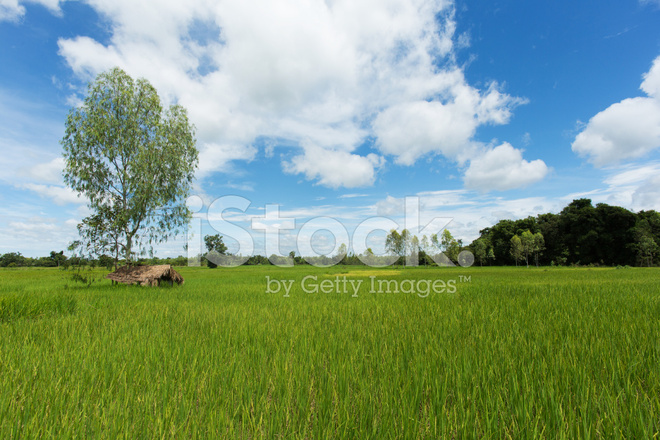 premium stock photo of asian landscape with ricefield
