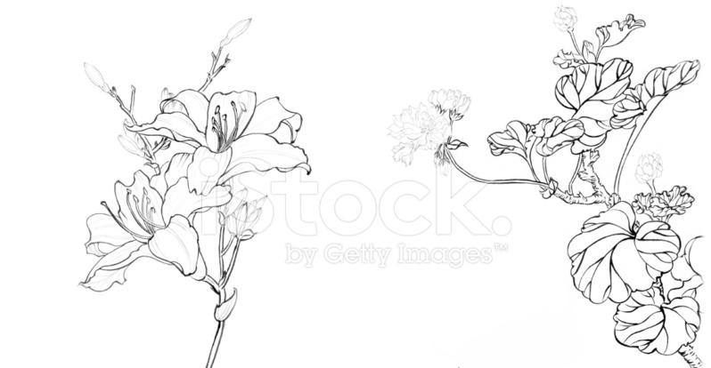 Benim Sanat Eseri çin Boyama çiçek Stock Vector Freeimagescom