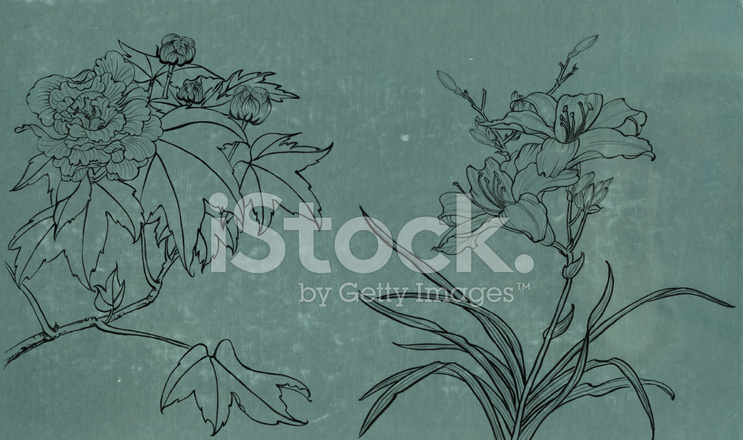 Line Drawing Flower Images : Tonal and line drawings katy s