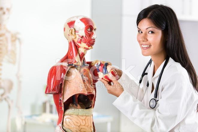 Student on Anatomy Class Stock Photos - FreeImages.com