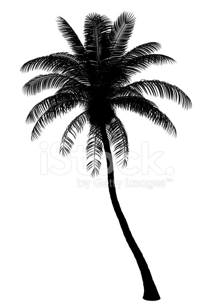 Silhouette Of Coconut Palm Tree Isolated On White Background Stock