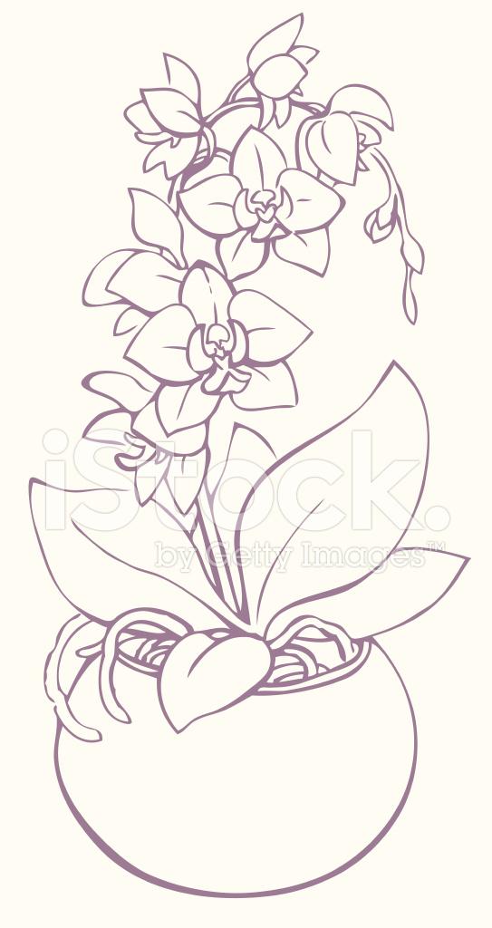 Orchid Flower Line Drawing : Contour de vecteur branche fleurs d orchidée dans un