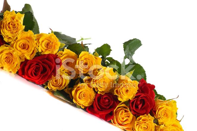 Rosas Amarelas E Vermelhas Fotos Do Acervo Freeimagescom