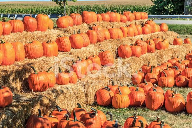 Wiersze Dynie Na Halloween Zdjęcia Ze Zbiorów Freeimagescom