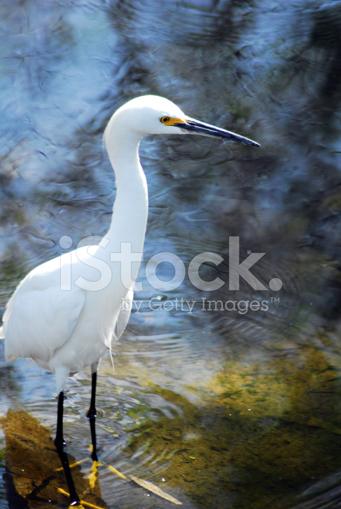Crane Bird Stock Photos - FreeImages com