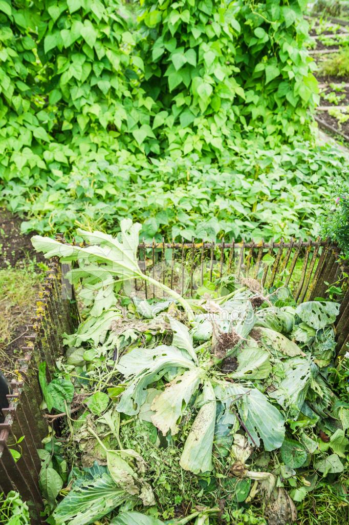 Bidone Del Compost Vegetale