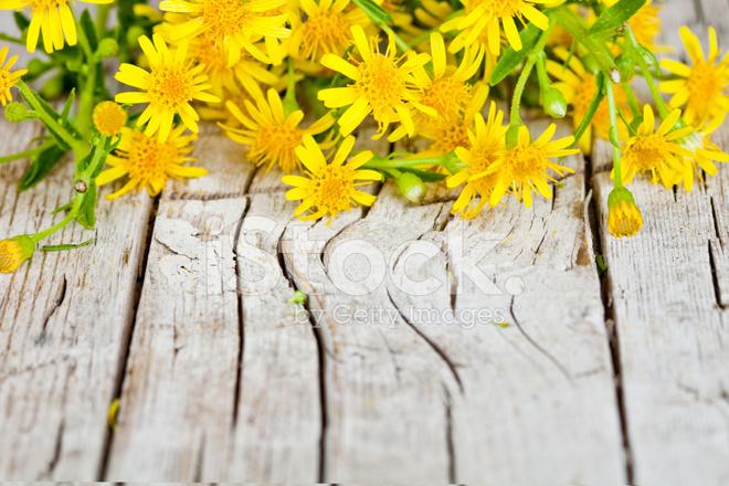 Flores Amarillas Silvestres Fotografias De Stock Freeimages Com