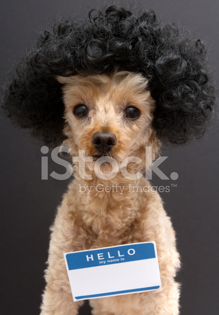 Curly Hair Dog Names Short Curly Hair