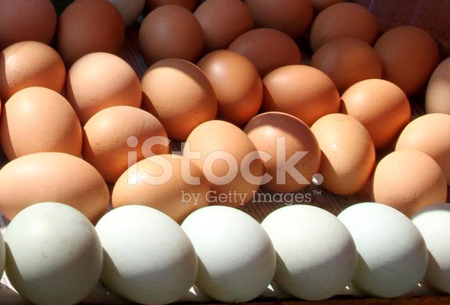 egg-6511前置放大电路