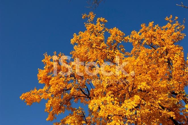 árboles De Otoño Fotografías De Stock Freeimagescom