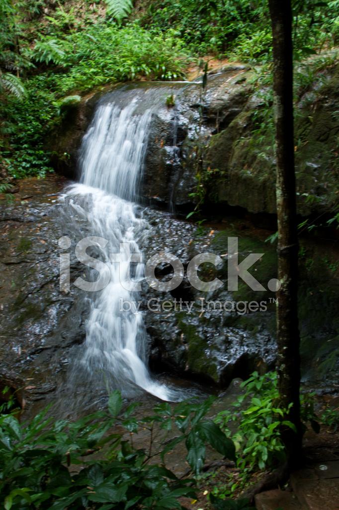 Wasserfall Im Bambus Wald Stockfotos Freeimages Com
