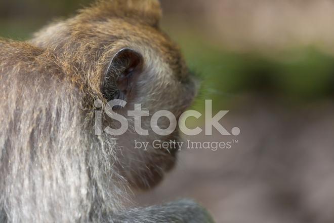 Tatlı Küçük Maymun Günlük Yaşamda Stok Fotoğrafları Freeimagescom