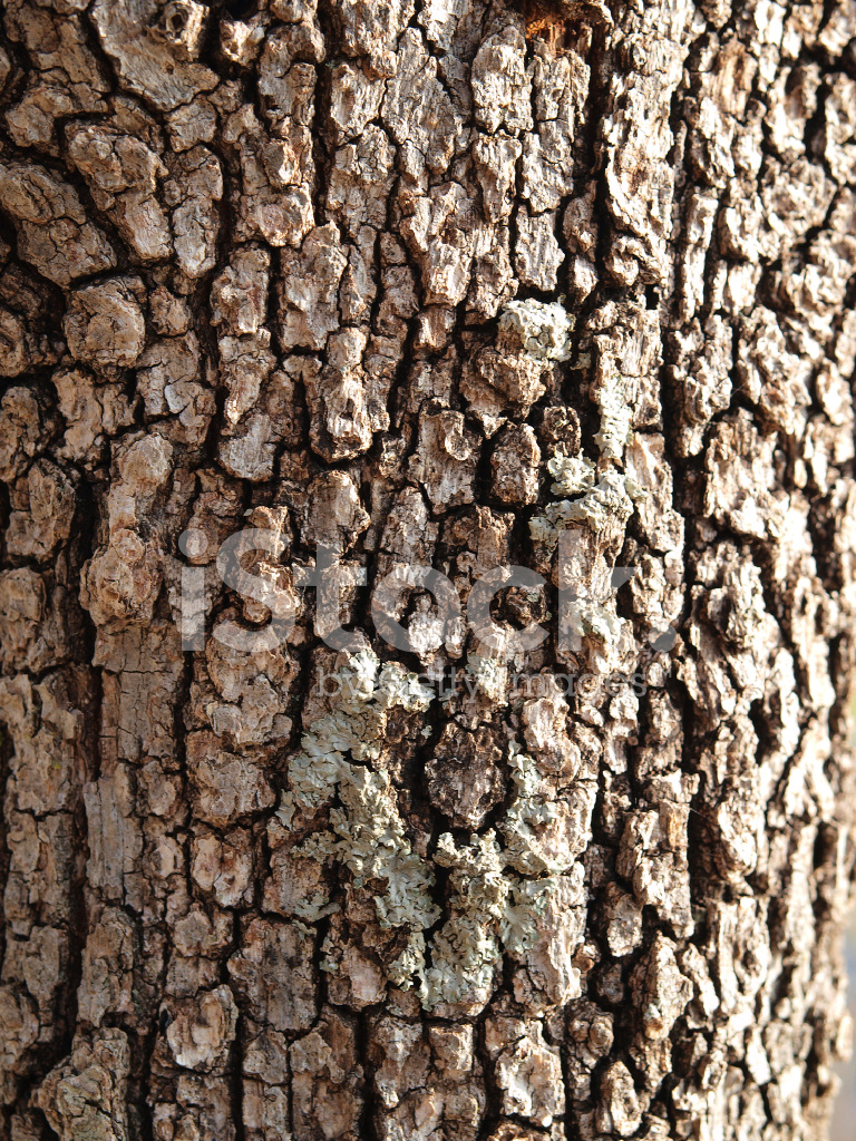 Tree Bark Close Up 629861 further 13506750 also rufflette co further Sendai Mediatheque Toyo Ito likewise University Of Tasmania Medical Science 2 Lyons. on hospital interior design